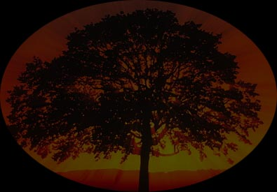 Tree with sunset
