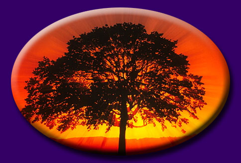 Tree with Sunset - Click to return to Splash/Entrance Page